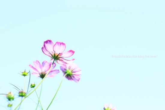IMG_6258.jpg