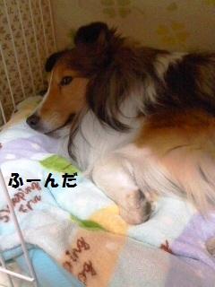 PA0_0327-bp.jpg