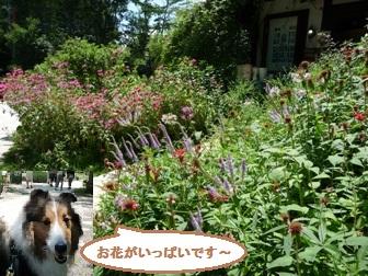 arthurflowers.jpg