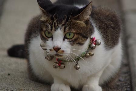 飼い猫 (1)