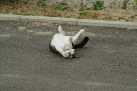 飼い猫 (2)