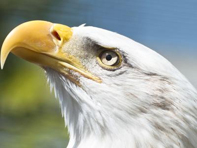 白頭鷲~1