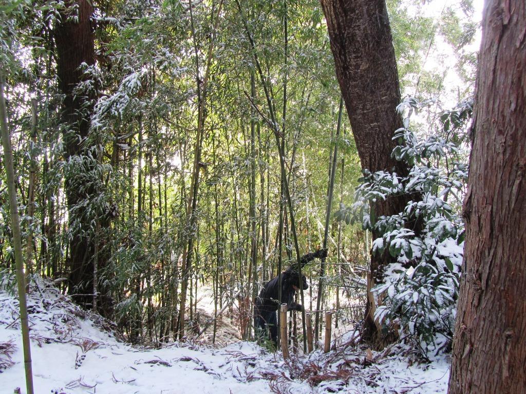 竹伐採全景