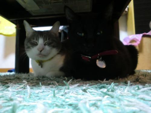 ビビちゃん&ルフィー