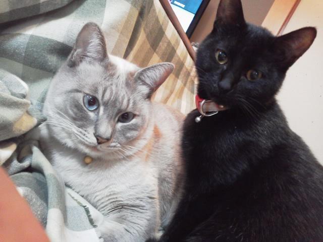 チョッパー&ビビ