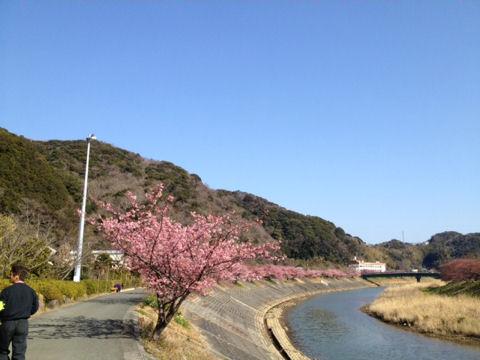 2-28桜