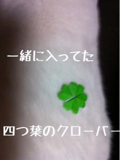 photo2_20130225131823.jpg