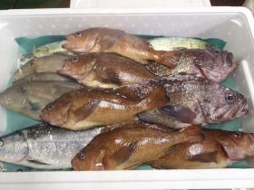 2鮮魚セット20131230