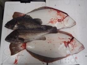 7鮮魚セット20131230