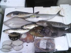9鮮魚セット2014131