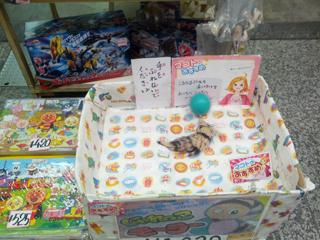 うさぎ山商店街10