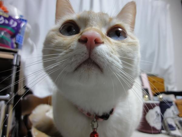 しーちゃん ブログ使用2012年12月30日