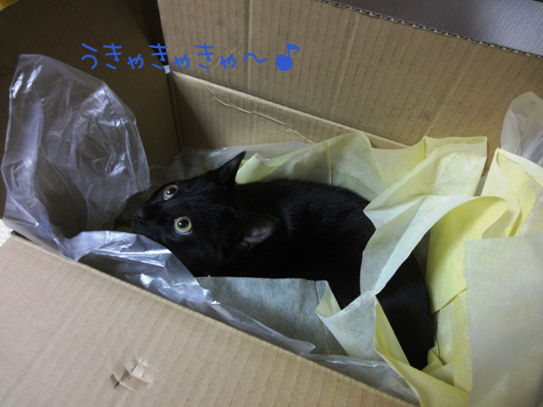 DSC03579 プレゼント② ①