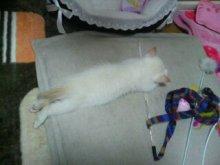 きゃらめるしっぽ-行き倒れ寝④