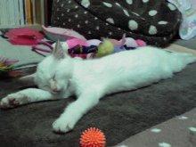 きゃらめるしっぽ-行き倒れ寝②