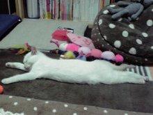 きゃらめるしっぽ-行き倒れ寝①
