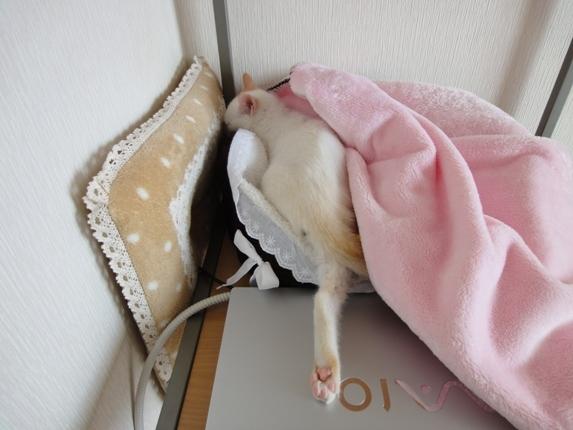 きゃらめるしっぽ-しーちゃん寝んね⑦