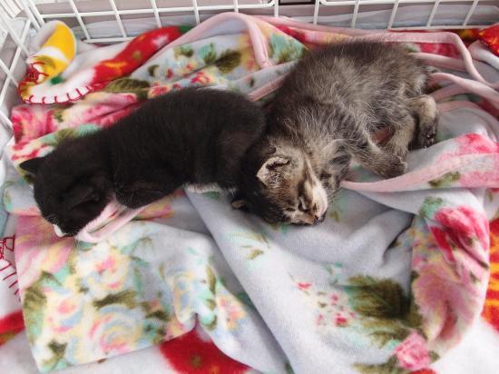 寝ている2匹。