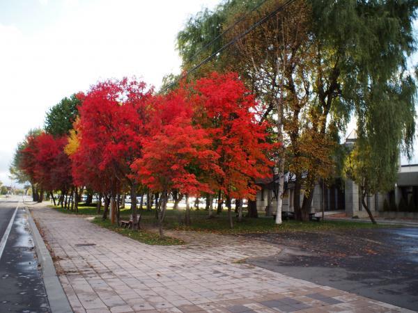 レンズキャップで撮った紅葉