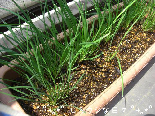 garden_2012_01.jpg