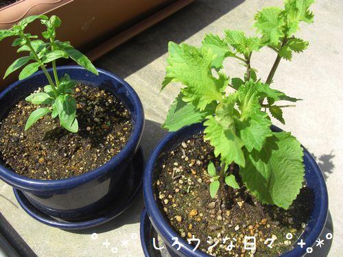 garden_2012_02.jpg