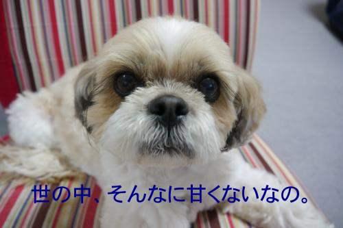 12052103_convert_20120521191634.jpg