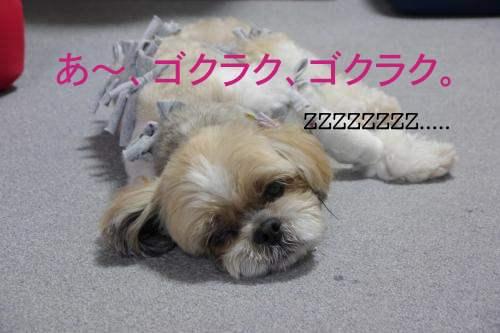 P1120362_convert_20120625170553.jpg