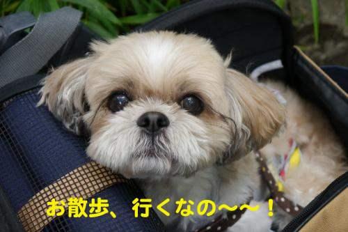 P1130021_convert_20120708211348.jpg