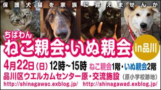 nekoinuoyakai20120422_320x180.jpg