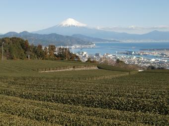 茶畑と富士山