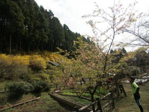 最明寺史跡公園へ