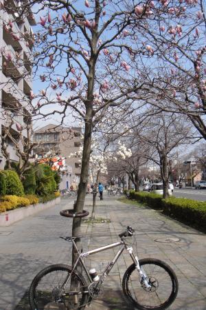 木に生る花