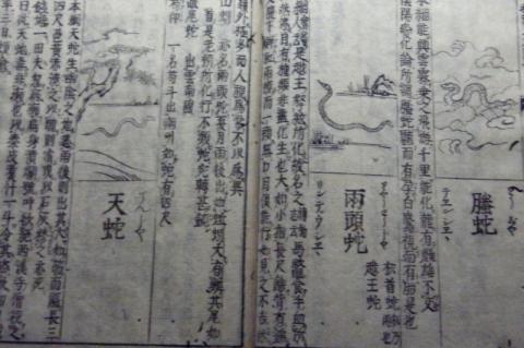 巳年の東京国立博物館は?