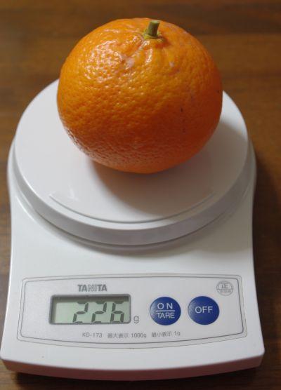 140105-伊予柑台はれひめ