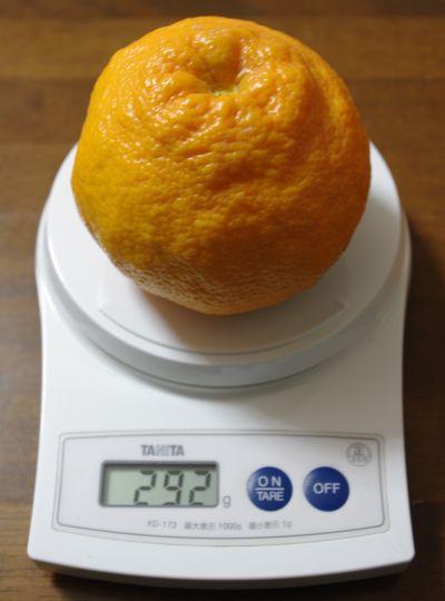 140126-伊予柑3