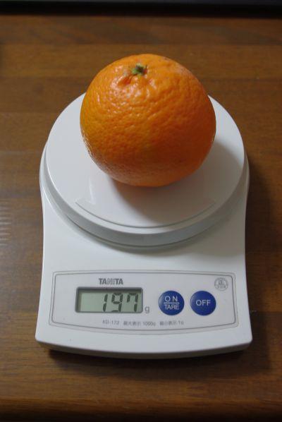 140126-伊予柑台はれひめ1