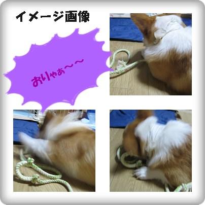 cats_20121108000506.jpg