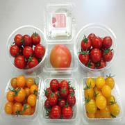 トマトモニター