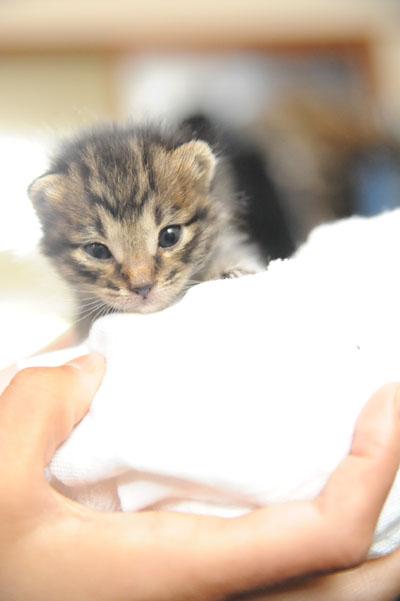 babycat01.jpg