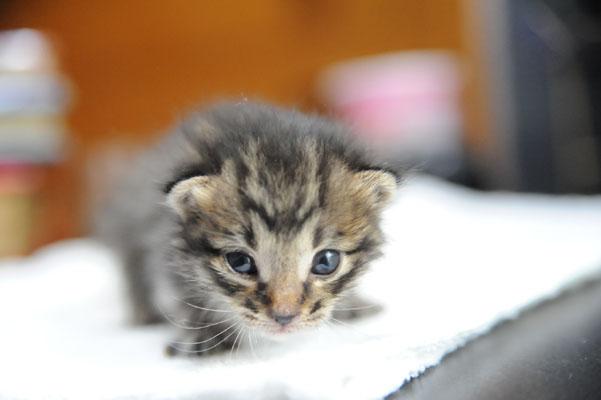 babycat02.jpg