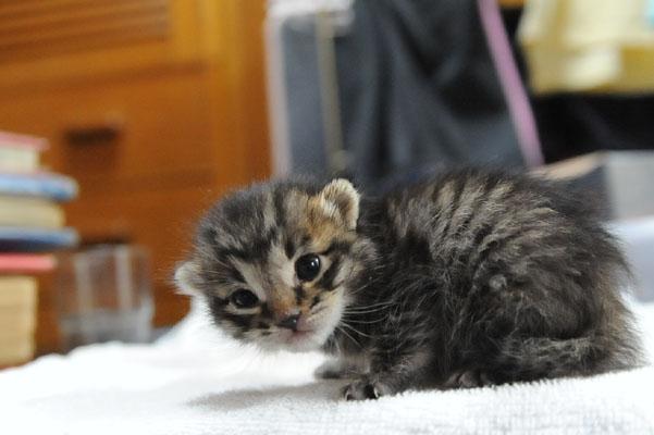 babycat03.jpg