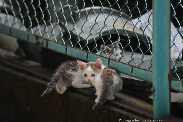 仔猫の兄弟