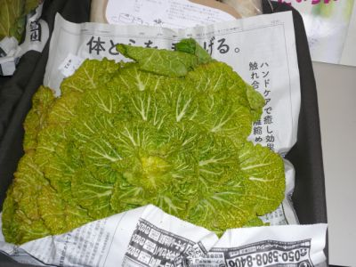 ばさ菜 縮小