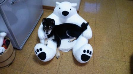 熊のクッション (3)