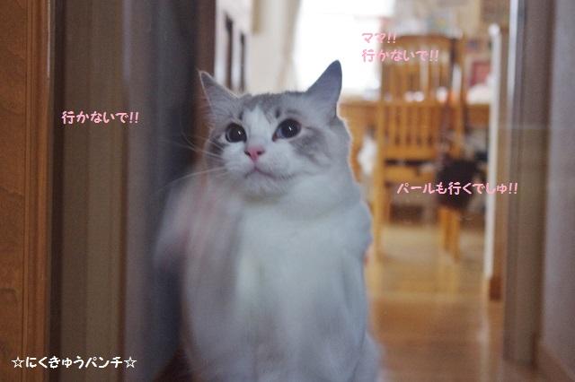 14IMGP4132.jpg