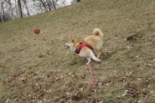 華のボール遊び