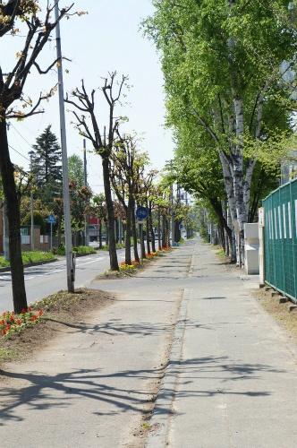 広い、帯広の歩道