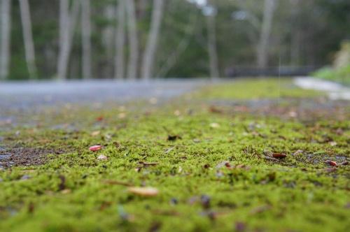 苔むす道路