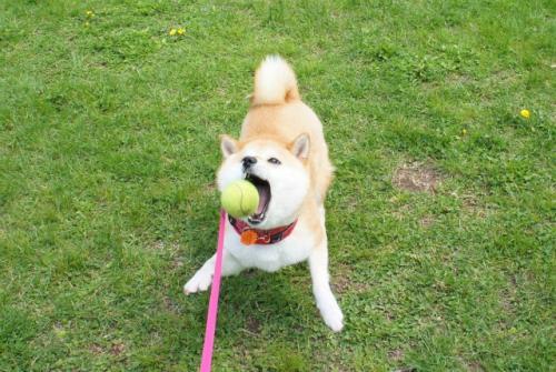 ボールあそび