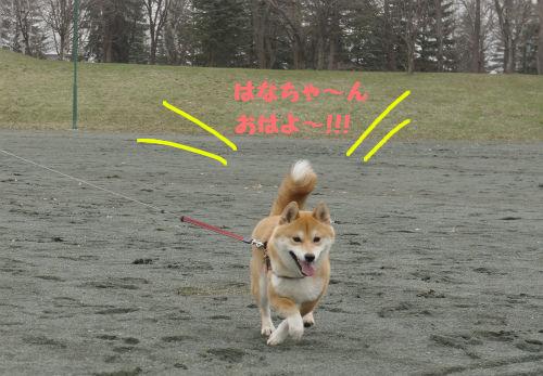 モモちゃん!